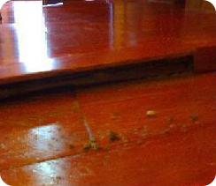 白蟻危害-東保除蟲.高雄專業除蟲‧白蟻防治(防除白蟻)、消滅白蟻、家白蟻剋星、Sentricon、白蟻餌劑、白蟻防治藥劑…等白蟻相關問題諮詢、探討與分享。白蟻防治專線:07-725-3691