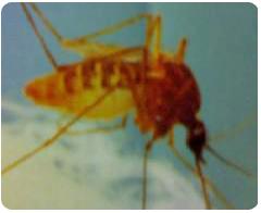 蚊子登革熱-東保除蟲.高雄專業除蟲‧白蟻防治(防除白蟻)、消滅白蟻、家白蟻剋星、Sentricon、白蟻餌劑、白蟻防治藥劑…等白蟻相關問題諮詢、探討與分享。白蟻防治專線:07-725-3691