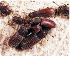 蛀蟲-東保除蟲.高雄專業除蟲‧白蟻防治(防除白蟻)、消滅白蟻、家白蟻剋星、Sentricon、白蟻餌劑、白蟻防治藥劑…等白蟻相關問題諮詢、探討與分享。白蟻防治專線:07-725-3691