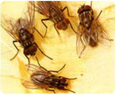 蒼蠅-東保除蟲.高雄專業除蟲‧白蟻防治(防除白蟻)、消滅白蟻、家白蟻剋星、Sentricon、白蟻餌劑、白蟻防治藥劑…等白蟻相關問題諮詢、探討與分享。白蟻防治專線:07-725-3691