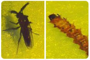小黑蚊-東保除蟲.高雄專業除蟲‧白蟻防治(防除白蟻)、消滅白蟻、家白蟻剋星、Sentricon、白蟻餌劑、白蟻防治藥劑…等白蟻相關問題諮詢、探討與分享。白蟻防治專線:07-725-3691