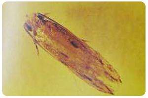 衣魚與衣蛾-東保除蟲.高雄專業除蟲‧白蟻防治(防除白蟻)、消滅白蟻、家白蟻剋星、Sentricon、白蟻餌劑、白蟻防治藥劑…等白蟻相關問題諮詢、探討與分享。白蟻防治專線:07-725-3691